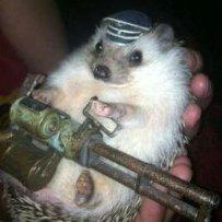 Battle_Hedgehog